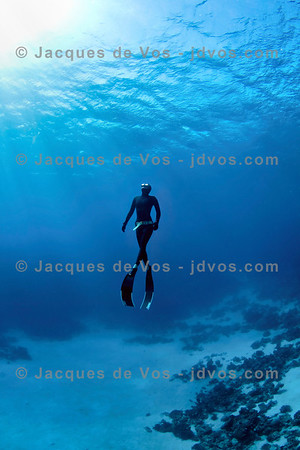 Shot while Freediving (on a single breath).  Record Italian Freediver Linda Paganelli coming up from depth over 'Islands' dive site in the south of Dahab, Egypt.  Ikelite 7D Housing (8'' Dome Port) Ikelite DS-161 Strobes