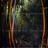 Underwater Corridor - Kelp Forest, South Africa